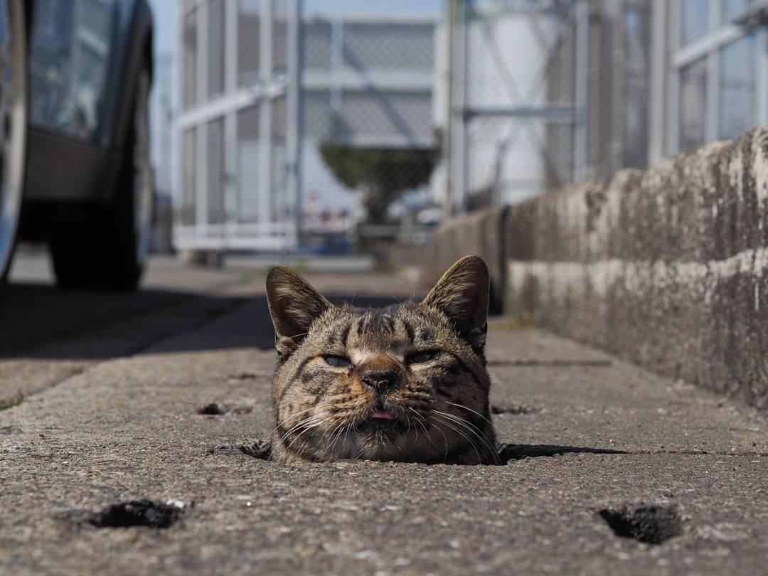 бездомный кот