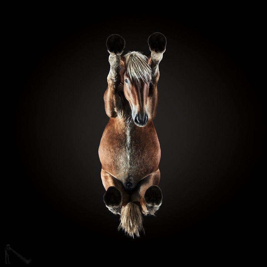 фото лошади снизу