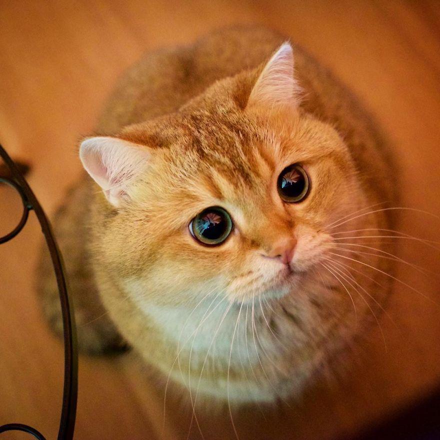 Хосико — настоящим котом в сапогах
