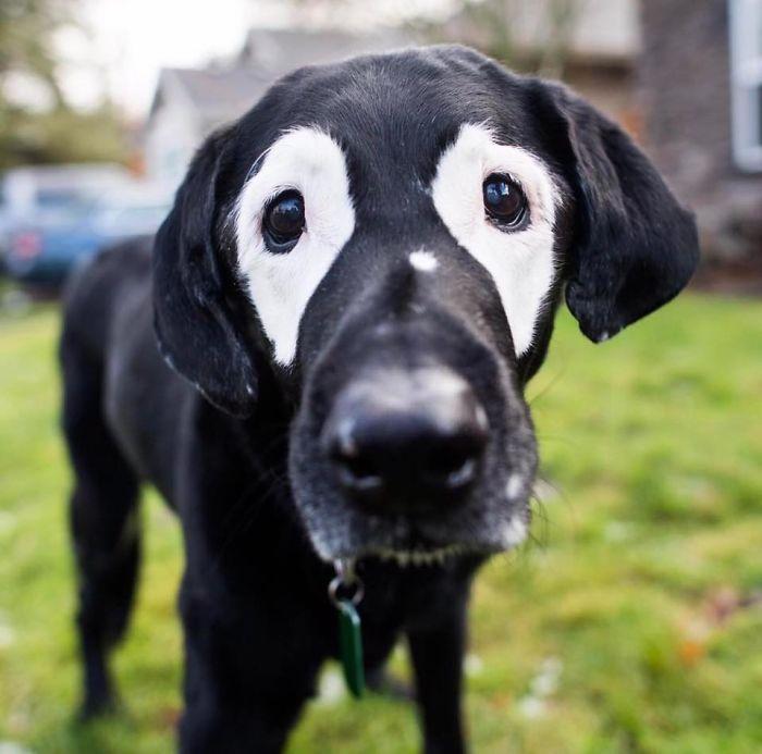 витилиго собака