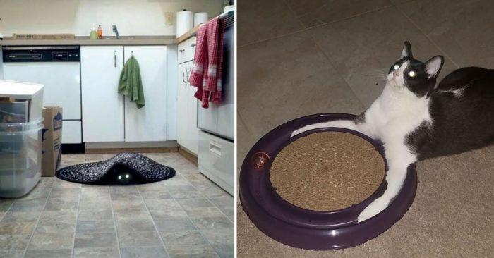 Фотоподборка, которая доказывает, что кошки на самом деле являются «демонами»