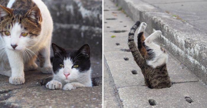 Бродячие кошки из водосточных отверстий стали частью жизни этого фотографа