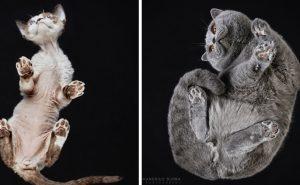 Фото кошек снизу
