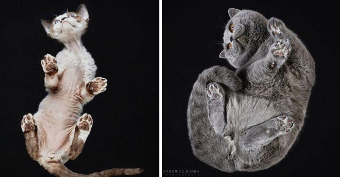 Фотографии кошек снизу