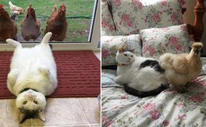Кот не знает, почему эти девчонки сходят по нему с ума