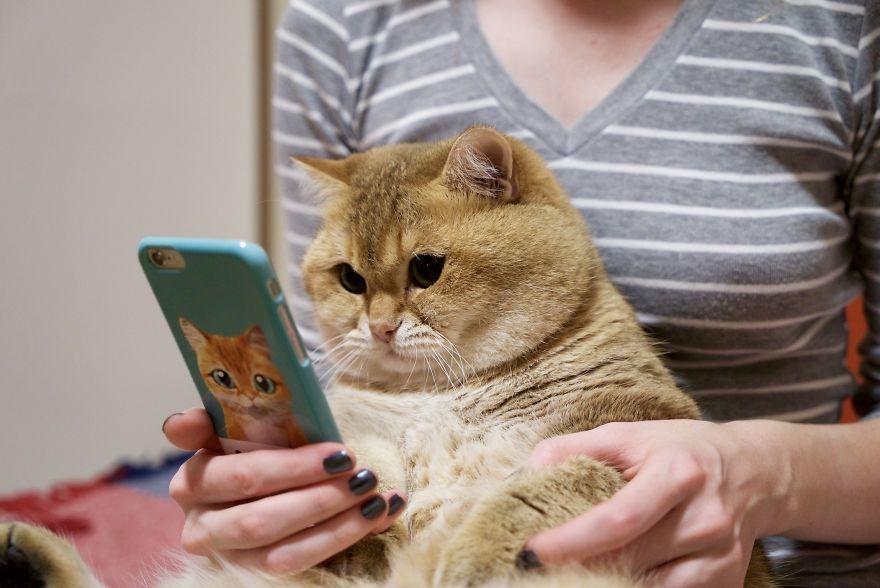 Хосико — настоящим котом в сапогах из шрека