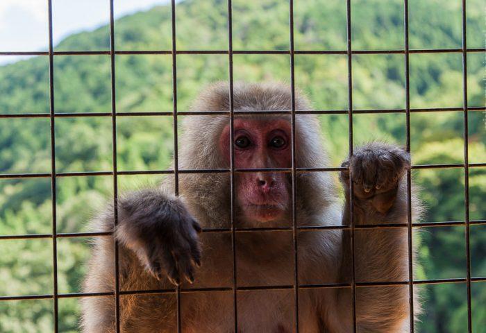 Прогулка по Киото — бамбуковый лес и парк обезьян