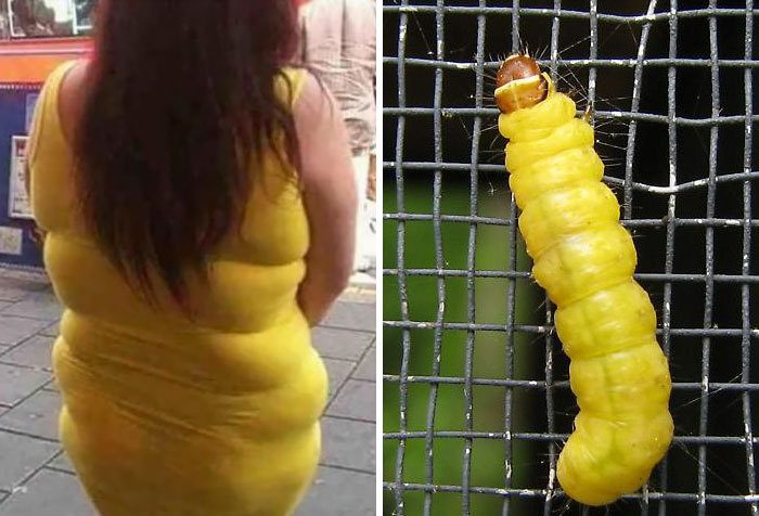 Эта дама или гусеница