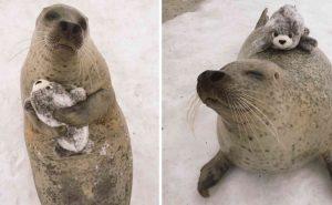 В японском зоопарке тюленю дали плюшевого тюленя. Его реакция была неожиданной