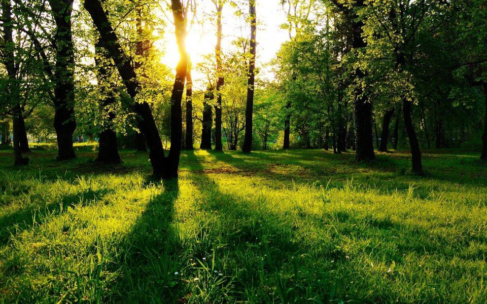 Трава отражает зеленый свет
