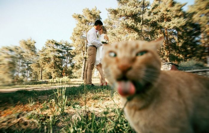 Смешные кошки, способные испортить любой фотокадр