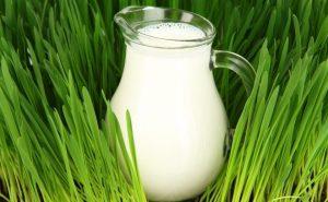А вы когда-нибудь задумывались, почему молоко белое?