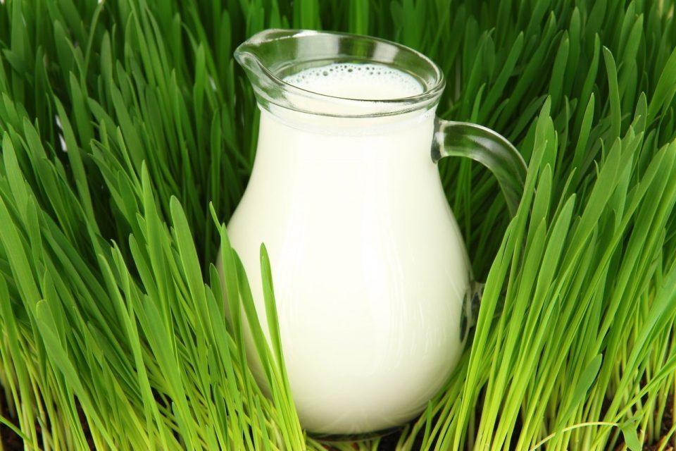 кувшин белого молока в траве