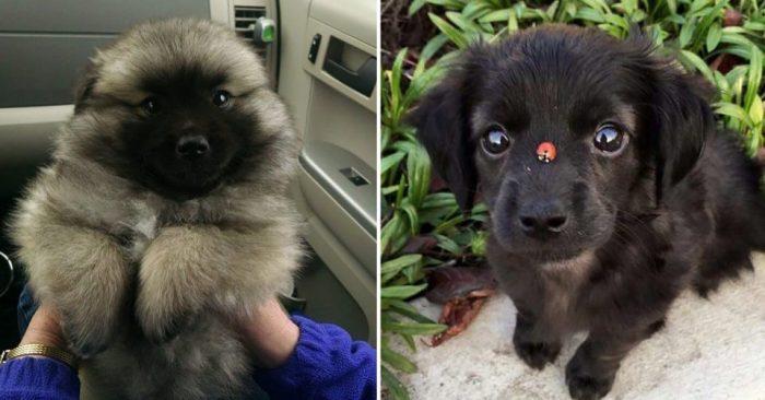 Очаровательные щенки доказывают, что у мимимишности нет границ