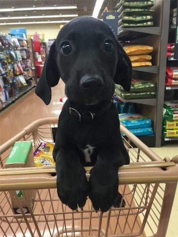 милый щенок фото
