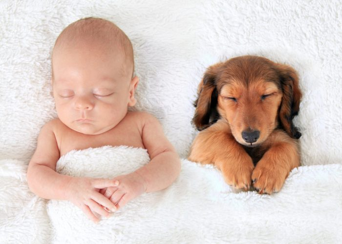 Доказательство того, что для малышей, собаки лучше чем подушки